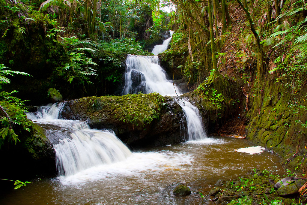 ... Onomea Falls At Hawaii Tropical Botanical Garden, Hilo | By D Niev