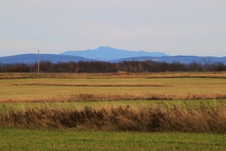 Mount mansfield and missisquoi national wildlife refuge gr for Vermont fish and wildlife jobs