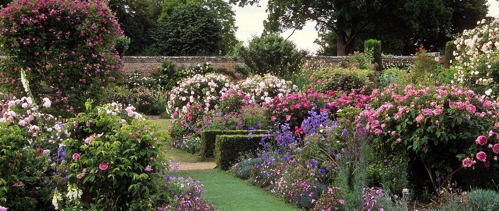 Mottisfont Abbey Rose Gardens Hampshire Uk A First Cla Flickr