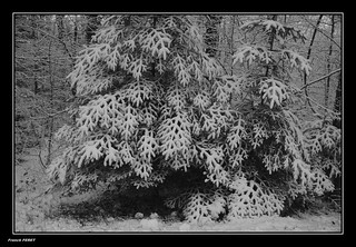 Neige dans la foret d'Alaise ** Snow in the forest of Alaise ** | by francky25