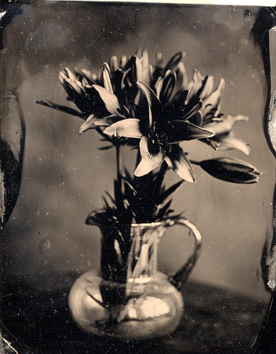 wet plate flowers | by ray_bidegain