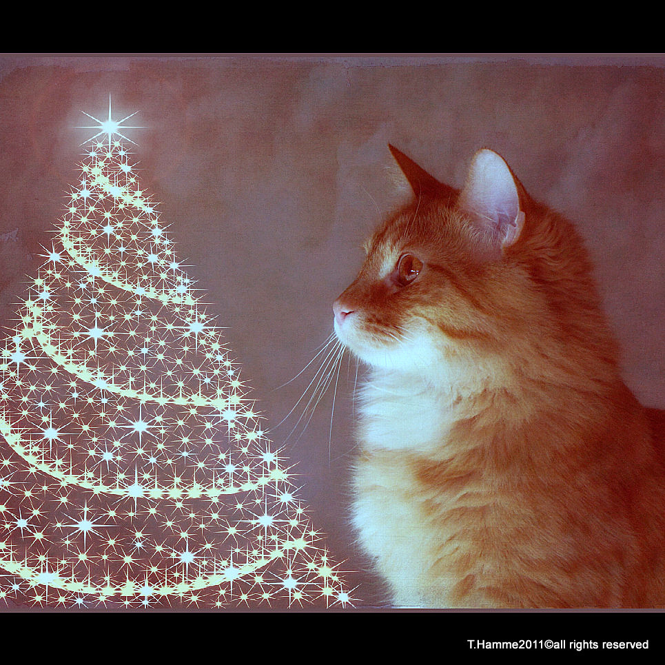 I Pray on Christmas ~~~~~~~ | EXPLORE Worthy, Challenge #31 … | Flickr