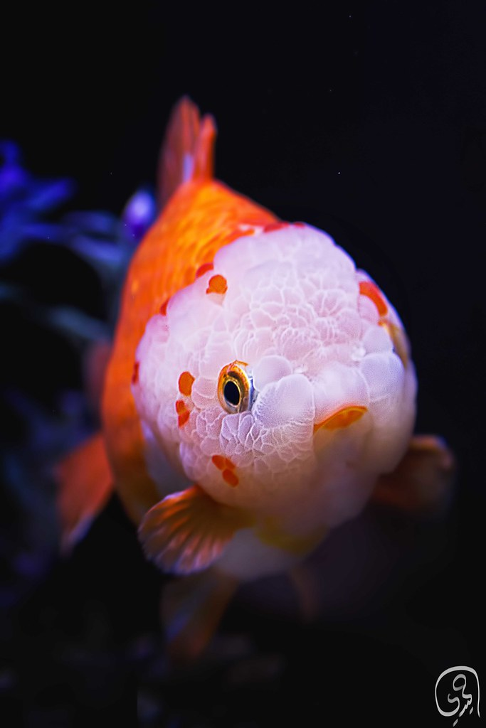 Brainy Fish Abdulaziz Alhumaidi Flickr