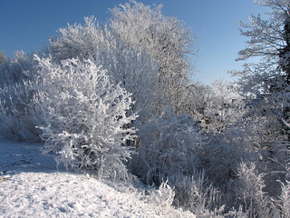 Winterwonderland | by Wilma1962*
