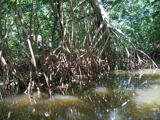 Mangroves | by The Colombian Way