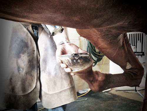 Hoof with farrier attached | by Jilroy Frosting Psmith