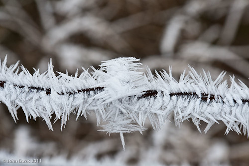fortified barbed-wire 20111210_8994 | by GORGEous nature