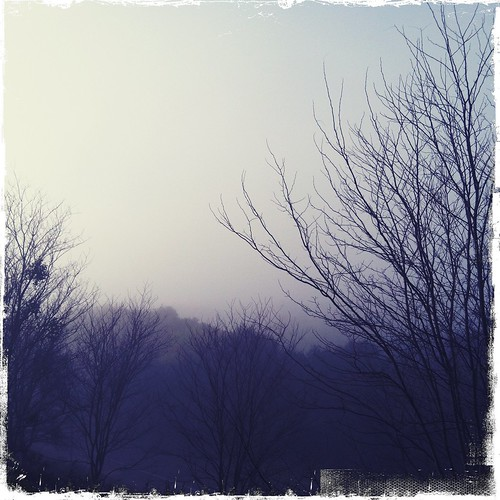 the view outside my studio on a foggy morning | by treiCdesigns