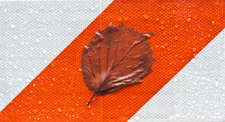 Leaf Stuck on the Orange Stripe | by Orbmiser