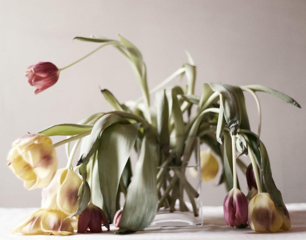 Dead Flowers Scribblyforrest Flickr