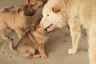 A Dog Family-Big Happy Family | by llee_wu