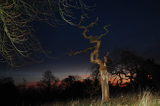 Hartwood tree sunset | by 3.0s