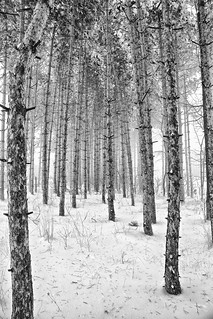 Winter Woods | by wsquared photography