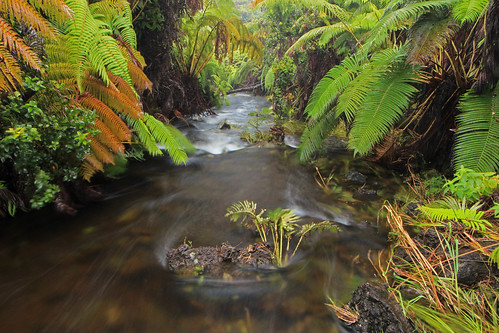 unnamed tributary, Wailuku River, Hilo Forest Reserve. South Hilo District, Hawaii County, Hawaii 2 | by Alan Cressler
