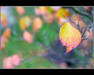 Seasonal Colours -- Explored | by Corkneyfonz