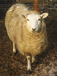 Posing with my fleece on. | by kate sturdy