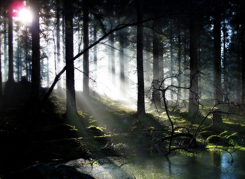 Misty Atholl Woods Light Show. | by eric robb niven