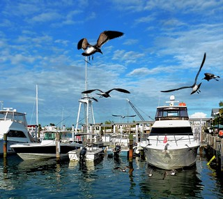 Harbor Life | by PelicanPete