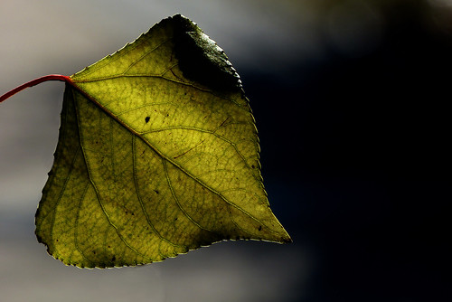 Googleaf map (explore 2-02-2012 #363) | by Saint-Exupery