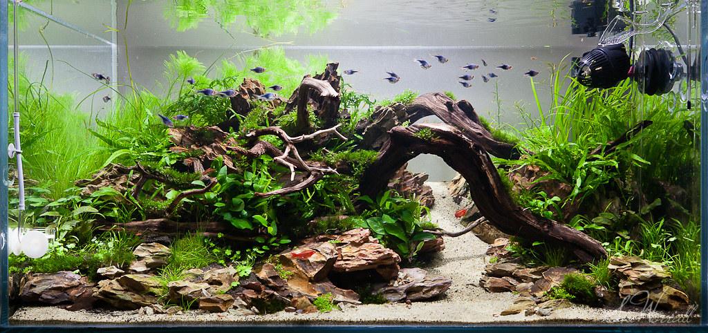 ... 90x45x45cm Planted Dragon Stone Aquascape | By Stu Worrall Photography