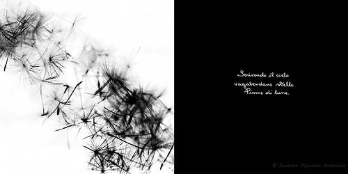 Calligrafie d'Anima (16)