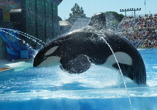 Shamu: Sea World in San Diego, 2011 | by lostin908