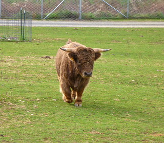 Bison, Reston Zoo | by Reston2020