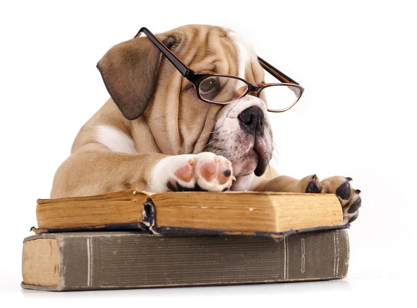 Image result for dog reading