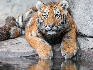 Luva posing at the water | by Tambako the Jaguar