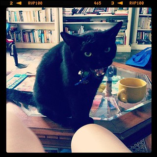 Harry Houdini questioning my assertion that cats do not belong on coffee tables | by tahinikill