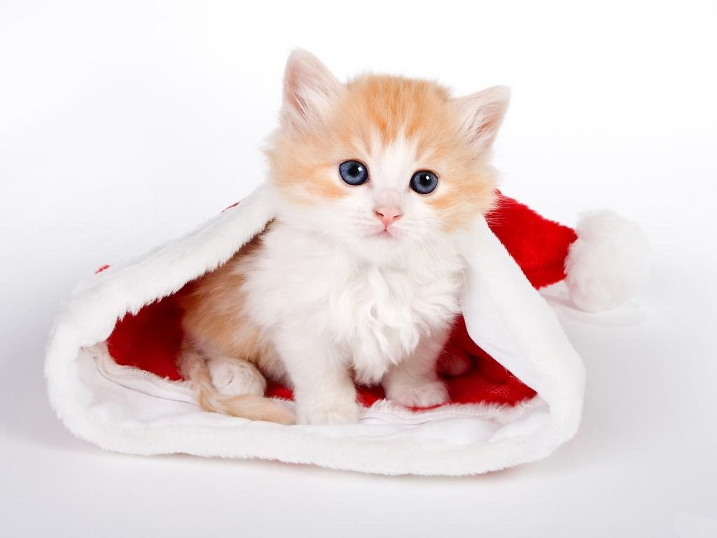 Sweet Christmas Kitten - Christmas Wallpapers and Christma… | Flickr