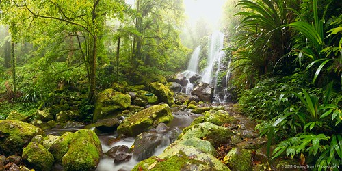 Rainforest of Lamington NP | by Quang Tran | Photography