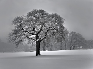 Winter in Merstham Feb 2012 | by Ben124.