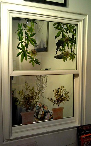 Garden window Decals | by pinkie611