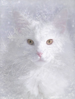 Feline Flurries (original photo by John Coleman) | by martisimas
