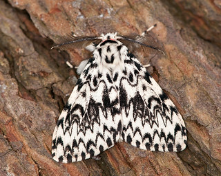 Black Arches (Barry's) | by Barry & Carole Bowden