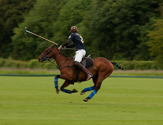 Polo | by Willbury not about much.