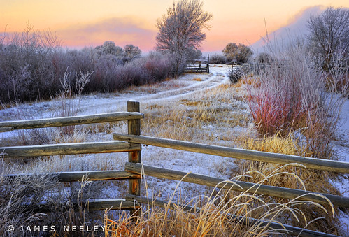 Morning Renewal | by James Neeley