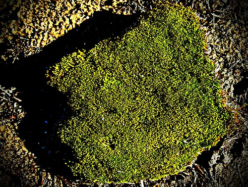 Moss On The Beach | by BACKYard Woods Explorer
