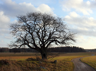 That Old Tree | by Steffe