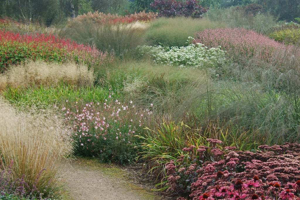 Late Flowering Perennials And Grasses Taken At The Piet Ou Flickr