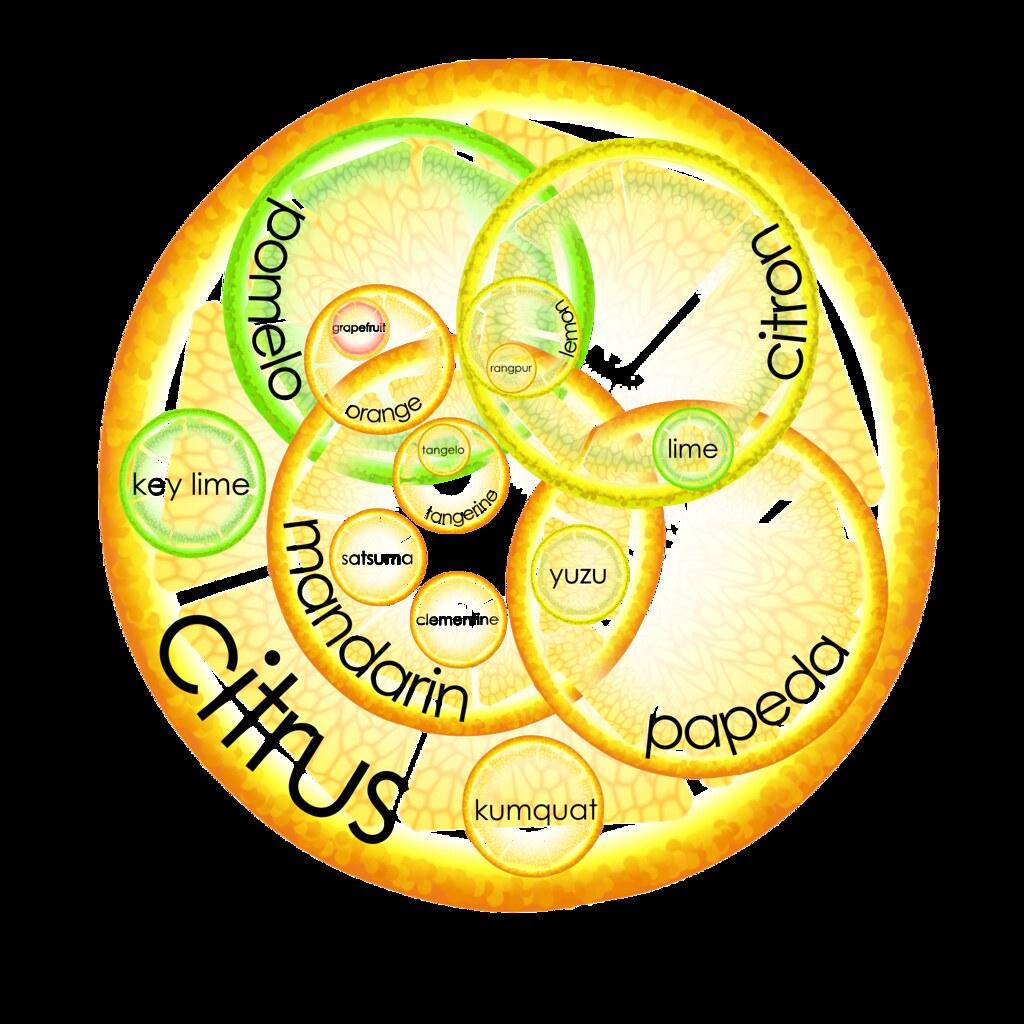 3 Circle Venn Diagram Maker: Citrus Venn diagram | From my blog post on the incestuous fau2026 | Flickr,Chart