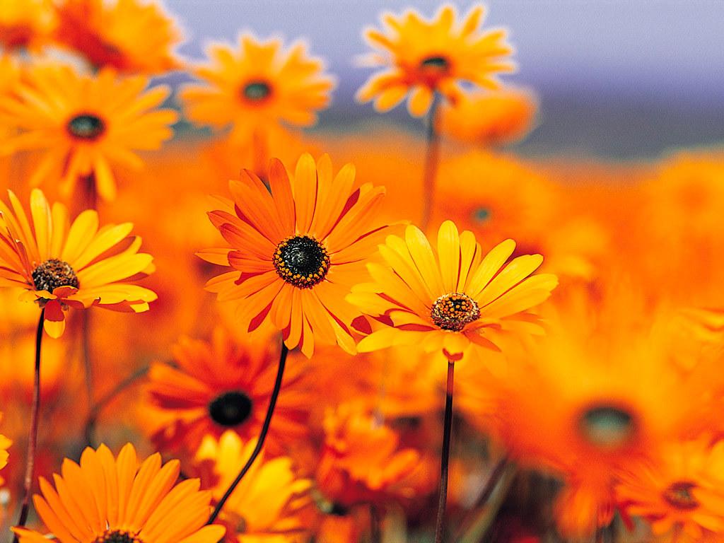 Naranja Colour Tumblr Www Miifotos Com