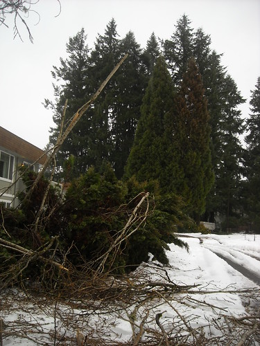 Storm Damage - January 2012 | by Washington State Department of Natural Resources