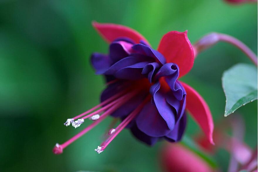 pretty flower  flower, Beautiful flower