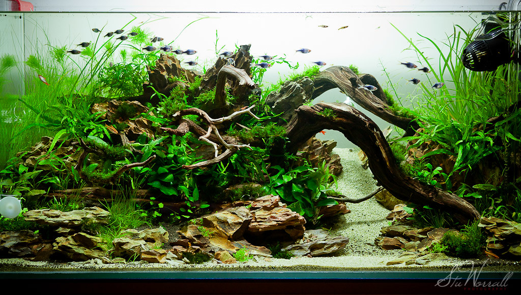 Good ... 90x45x45cm Planted Aquascape   Week 3 | By Stu Worrall Photography