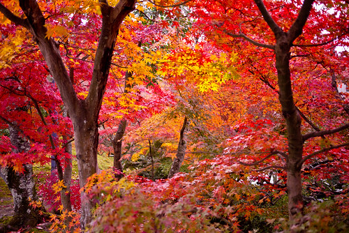 Leaves shining | by shinichiro*