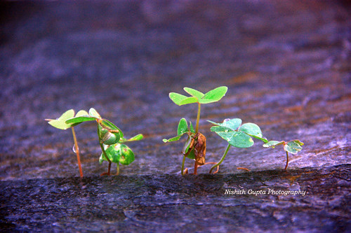 Miniature Family | by nishithgupta95