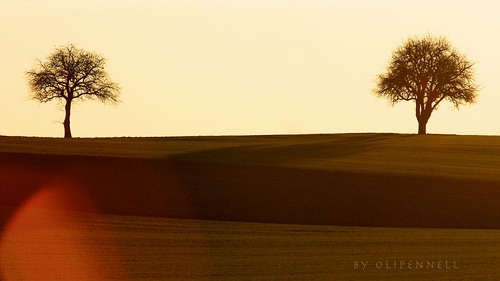two trees **Explored** | by olipennell