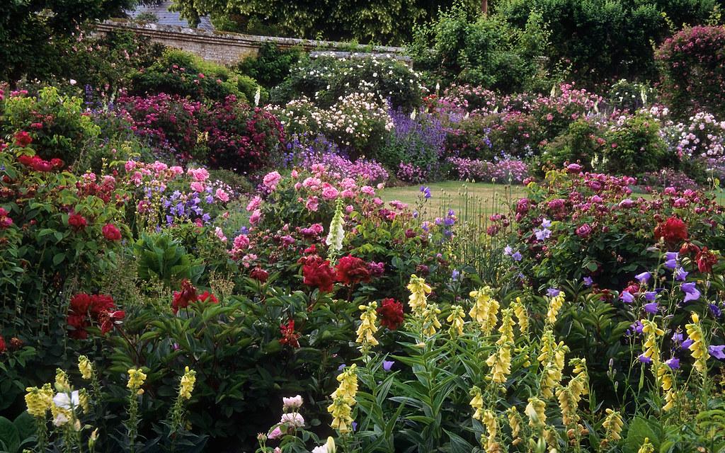 Mottisfont Abbey Rose Gardens Hampshire UK